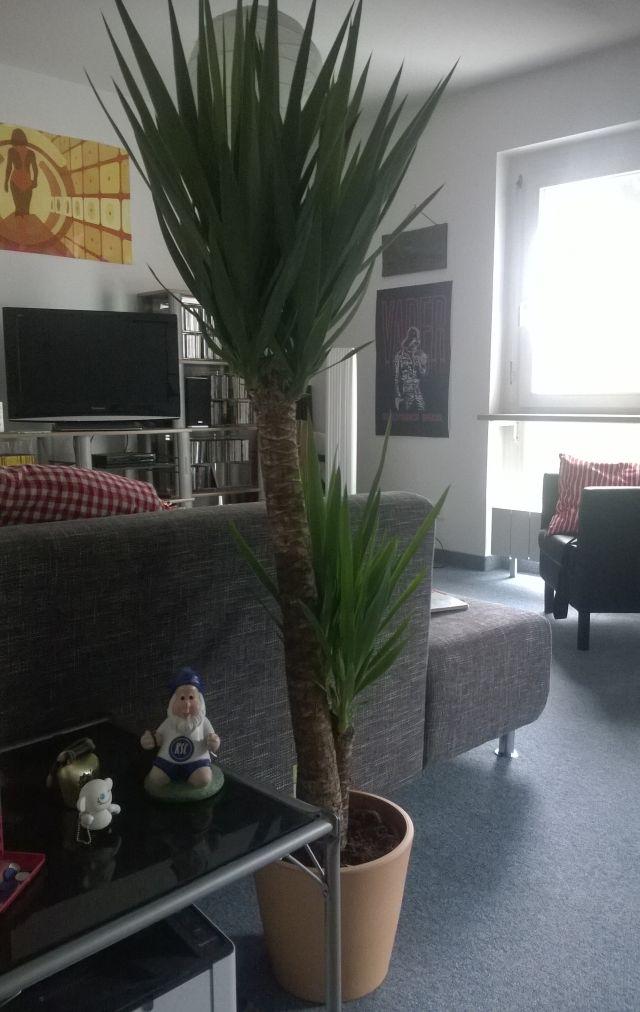 das hei t jetzt haul nummer neun. Black Bedroom Furniture Sets. Home Design Ideas